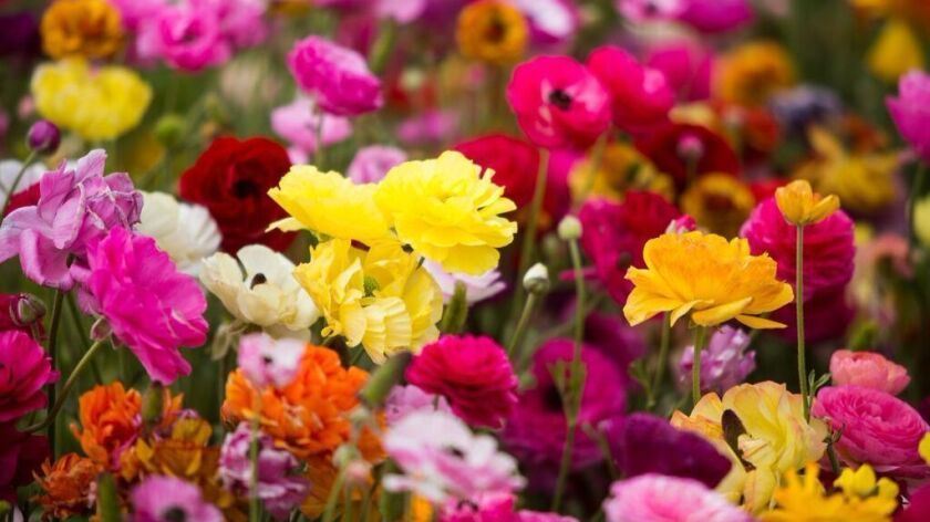 Petal to Plate - flower-infused essential oils at Omni La Costa Resort & Spa