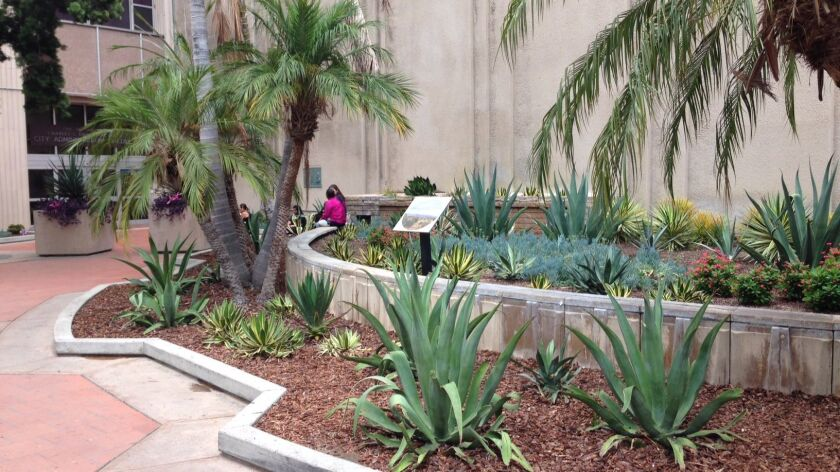 The Phil Swing Memorial Fountain, installed at the entrance to City Hall in 1967, has been converted to a demonstration desert garden.