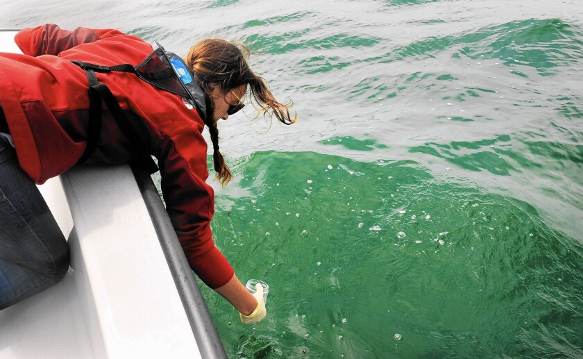 Ariadne Reynolds of the Bay Foundation collects a sample of a tar-like substance from the water off the coast of Manhattan Beach.