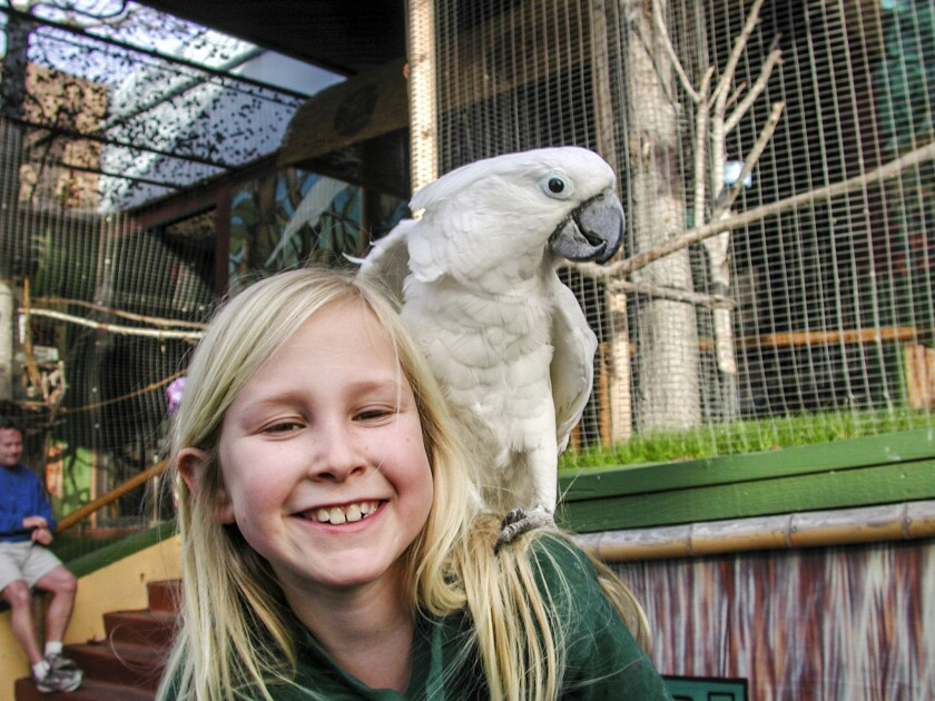 Carly, an ECO student, poses with one of the residents a chatty cockatoo from STAR ECO Station. Cock