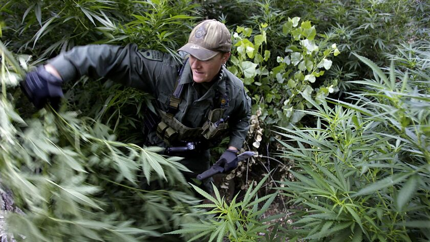 California's black market for pot is stifling legal sales. Now the governor wants to step up enforcement