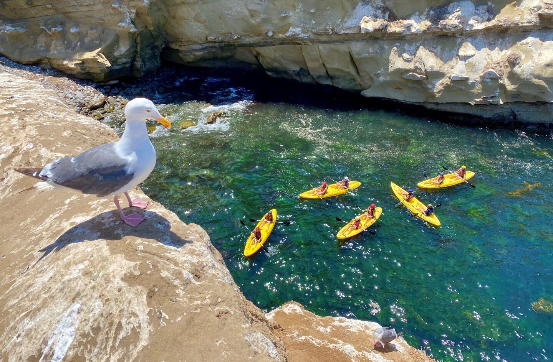"""Barbara Martin shared this """"bird's-eye view"""" near La Jolla Cove."""