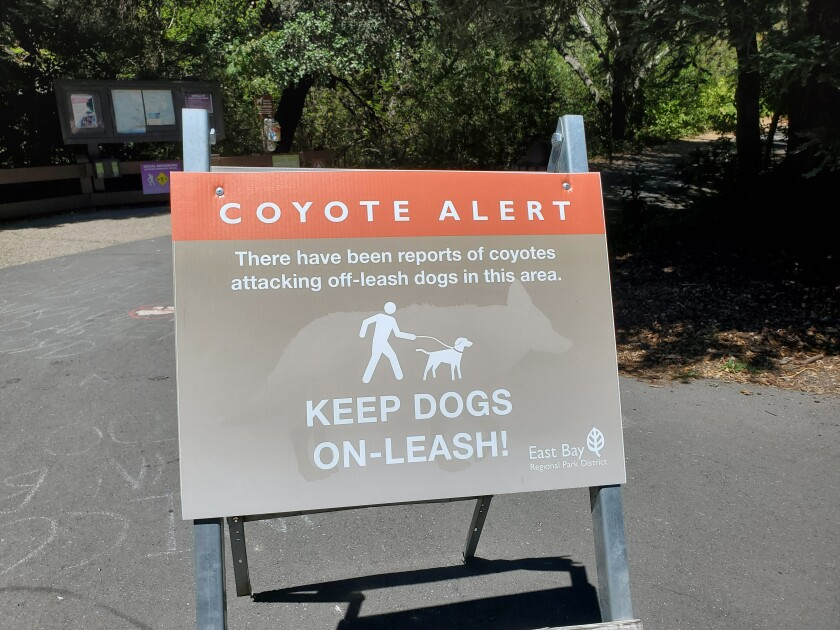 """A """"Coyote Alert"""" sign warns people to keep dogs on leashes."""