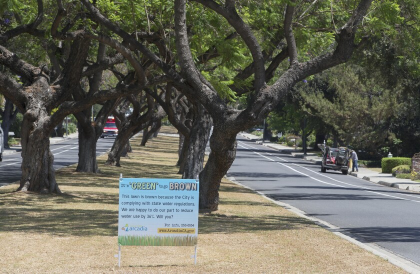 The city of Arcadia stopped watering the grass in the median of Santa Anita Avenue to comply with state drought regulations.
