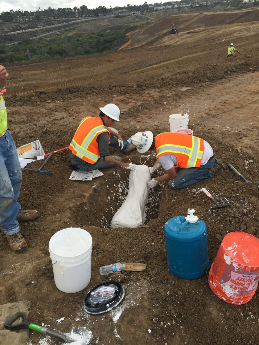 Workers finish placing a plaster cast on a mammoth bone found at the Quarry Creek development along state Route 78 in Carlsbad.