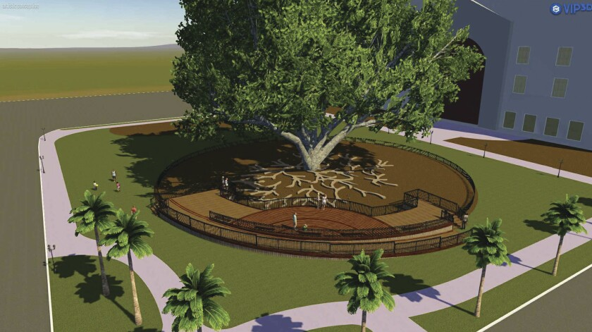 A viewing platform, shown in the artist's conception above, has been proposed for the Moreton Bay fig tree behind the Natural History Museum in Balboa Park. Adding the elevated platform, however, required FAA approval. It is only 28 inches high.