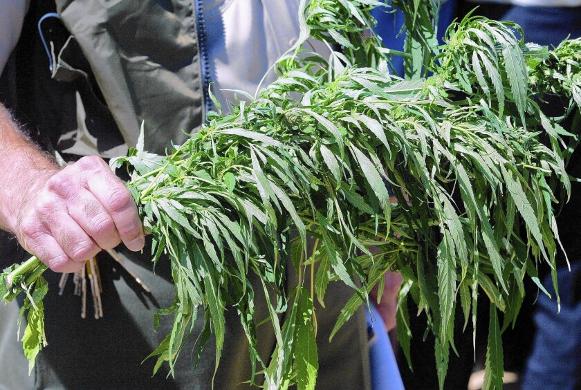 Some Wall Street analysts and health advocates say tobacco companies may again be considering the expanding market for legalized weed.