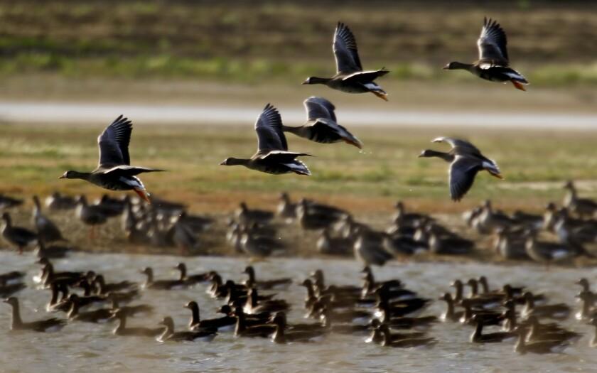 Birds, drought