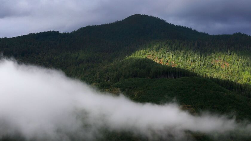 The Yurok tribe's carbon offset project encompasses thousands of acres of Douglas fir and mixed hardwood forest near the Klamath River in Northern California.
