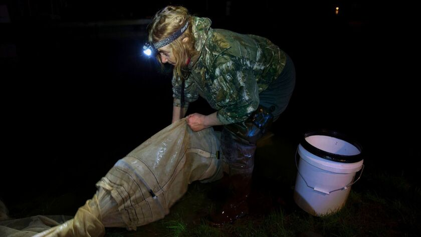 Julie Keene is a longtime elver fisherman, a person who fishes for American glass eels, along the Un