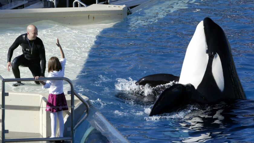 An orca performs at SeaWorld in San Diego in 2006.
