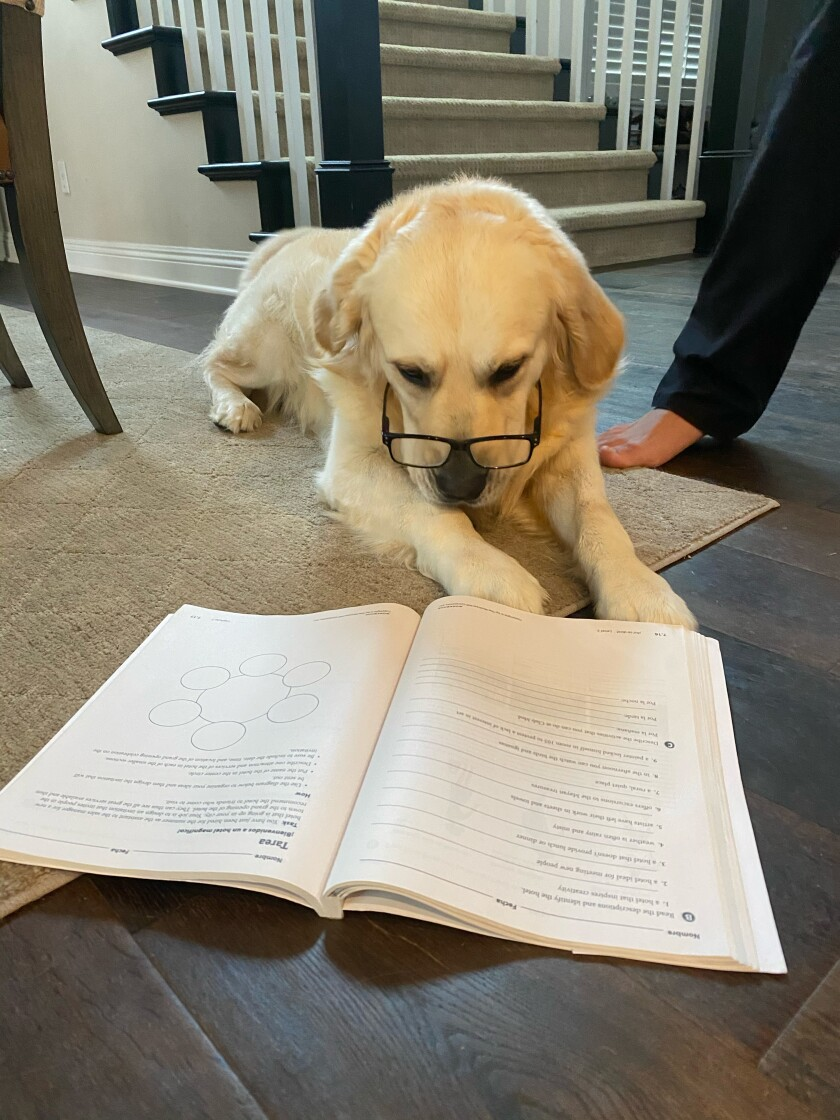 Photography students at Carlsbad High documented their experience with social distancing, through a remote learning assignment that used the COVID-19 pandemic as a teachable moment. On a lighter note, students shot images of their pets doing home-school work for them.