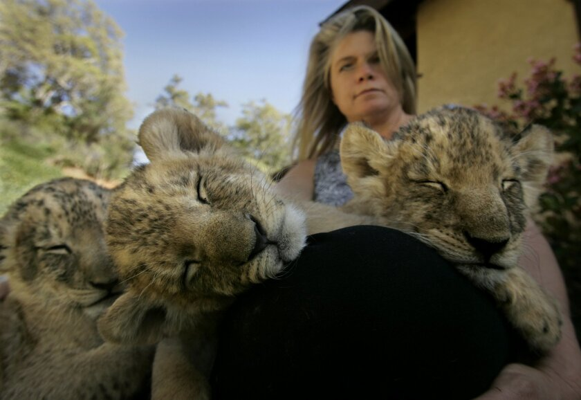 Three lion cubs came to the Alpine big-cat sanctuary in 2007, and former El Cajon Councilwoman Jillian Hanson-Cox's husband donated money to have one of them named after her. [U-T file]