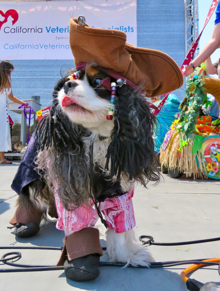 Contestants_Dogs__MM_0251 (1) (3) (1).jpg