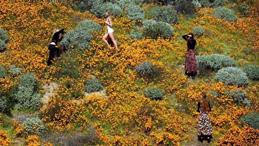 "Visitors take pictures in the middle of a poppy field on a slope of Walker Canyon near Lake Elsinore. The heavy rains in California have boosted the ""super bloom"" of wild desert flowers."