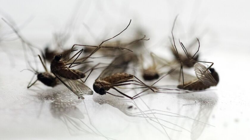 West Nile season typically begins with warmer weather in the summer and continues into the fall.