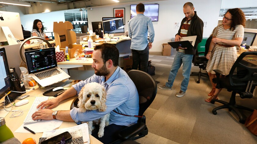 Alec Brownstein, Dollar Shave Club's vice president of creative, works at his computer with his dog Ziggy on his lap at the company's headquarters in Marina del Rey.
