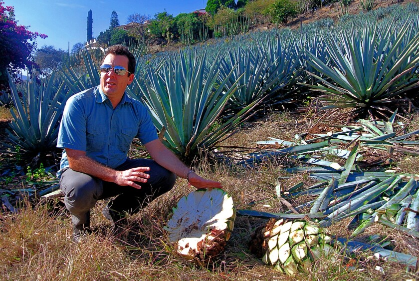 Guide Clayton Szczech explains how the agave plant is harvested in a field in Tequila, Jalisco.