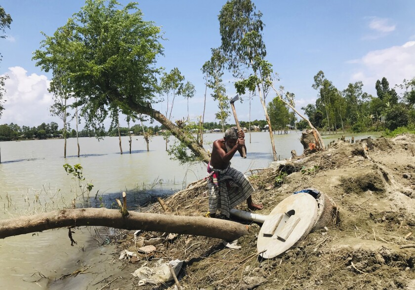 A Bangladeshi elderly person cuts an uprooted tree as the area around him is seen submerged with flooded waters in Manikganj, some 100 kilometers (62 miles) from Dhaka, Bangladesh, Thursday, Aug. 13, 2020. Across South Asia, more than 17 million people have been affected by this year's monsoon flood. Nearly 700 people have died in Bangladesh, India and Nepal as almost one-third of Bangladesh went under water while Indian states of Assam and Bihar in the northeast were largely affected and vast regions in Nepal were flooded and monsoon-triggered landslides became a nightmare. (AP Photo/Al-emrun Garjon)