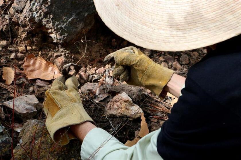 Un integrante de un colectivo mexicano que busca familiares desaparecidos halla restos humanos en una fosa al sur de México. EFE/Archivo