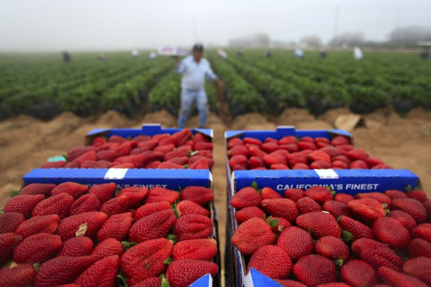 A proposed bill that would've granted legal work permits to unauthorized immigrant farmworkers in California died in the Senate Appropriations Committee.