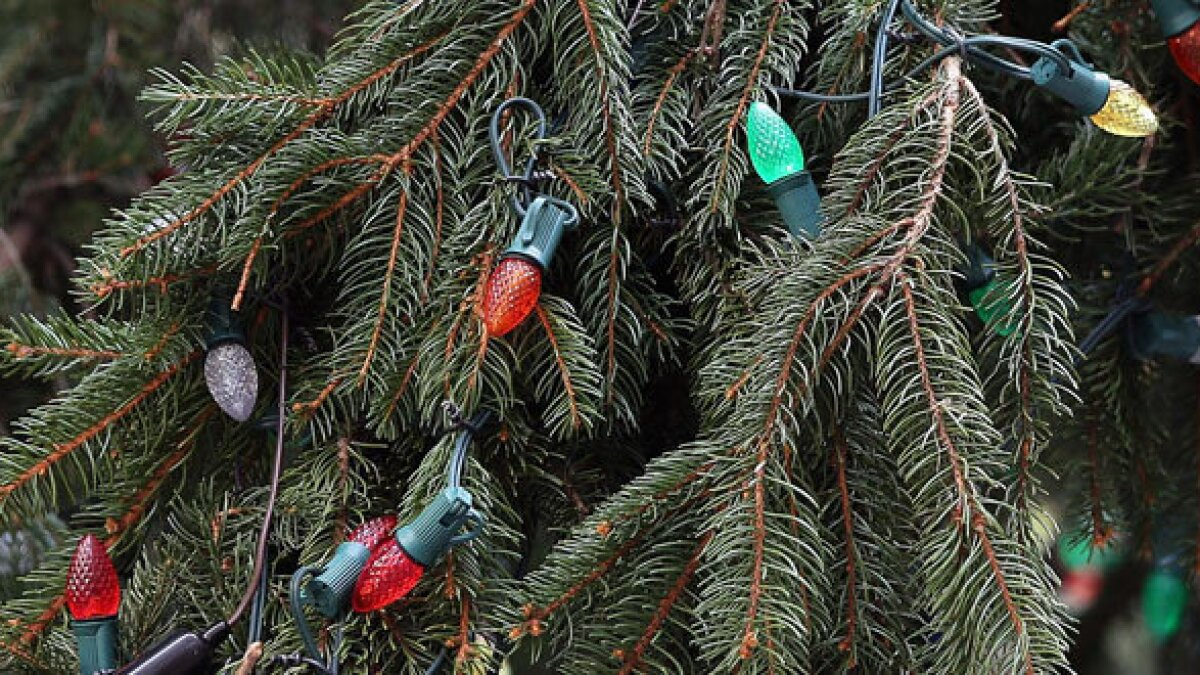 2020 Denham Spring Christmas Lights Louisiana town is up in arms over resident's Christmas lights