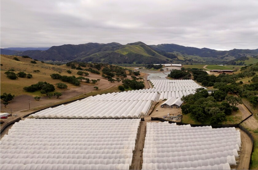 The world's largest pot farms, and how Santa Barbara opened the door