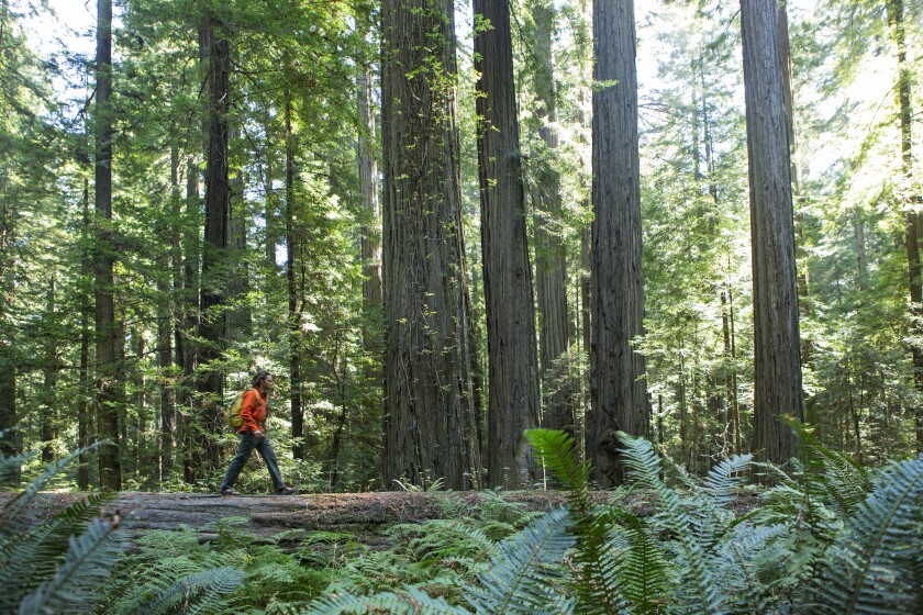 bfd14d7b6791 Lost on the hiking trail? 6 ways to improve your chances of getting ...