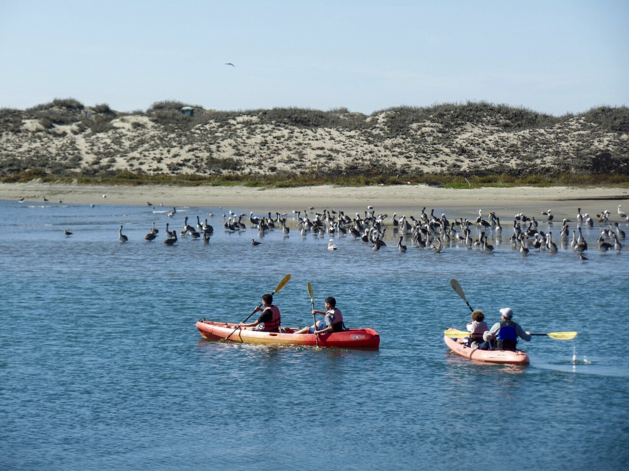 Kayakers paddle through the Elkhorn Slough, home to migrating sea birds and other wildlife by Moss Landing, Calif.