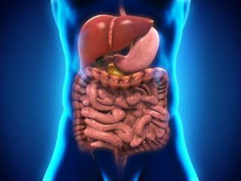 digestion-20190307