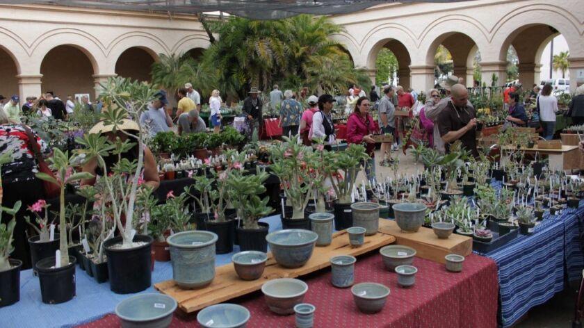 San Diego Cactus & Succulent Society's summer sale