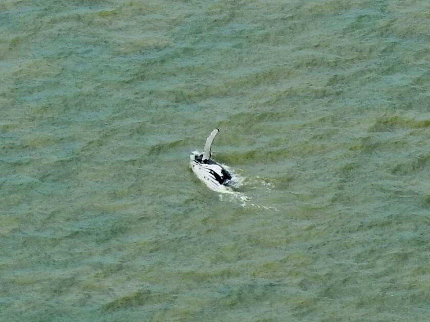 En esta foto proporcionada por Parks Australia, una ballena jorobada