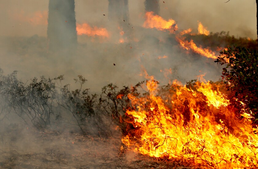 A fire burns amid brush and trees