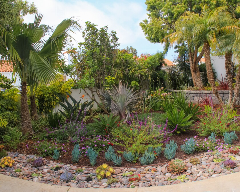 MSE Landscape Professionals took home an award for their Catherine Dennis (Design and Build Construction) Project in Oceanside, and another award for their Toyota of Escondido (Commercial Maintenance) Project in Escondido.