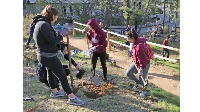 More than 40 volunteers planted about 70 drought resistant plants as part of an ongoing project by the Glendale Parks and Open Space Foundation and the Glendale community services and parks department to improve a neglected park trail near the Brand Library.