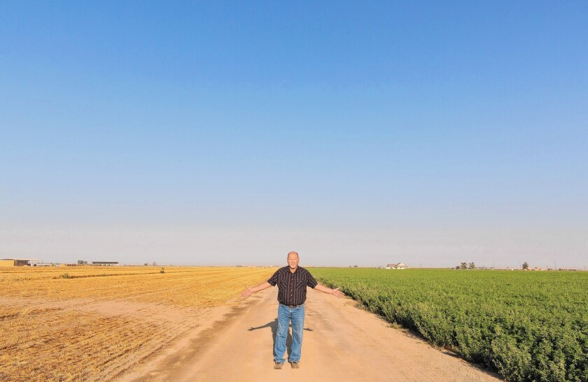 The difference between the fields on either side of dairy farmer Tom Barcellos is water.