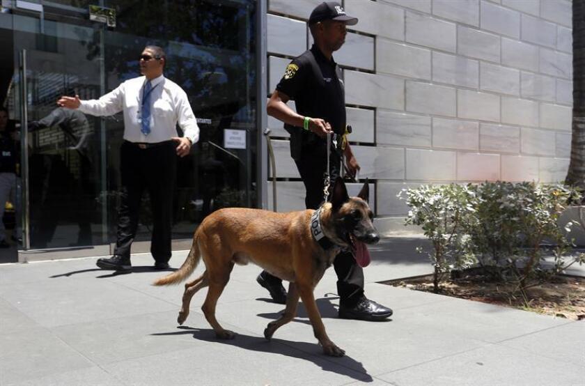 Un agente de la policía de Puerto Rico inspecciona con un perro el lugar donde fue lanzado un artefacto explosivo. EFE/Archivo