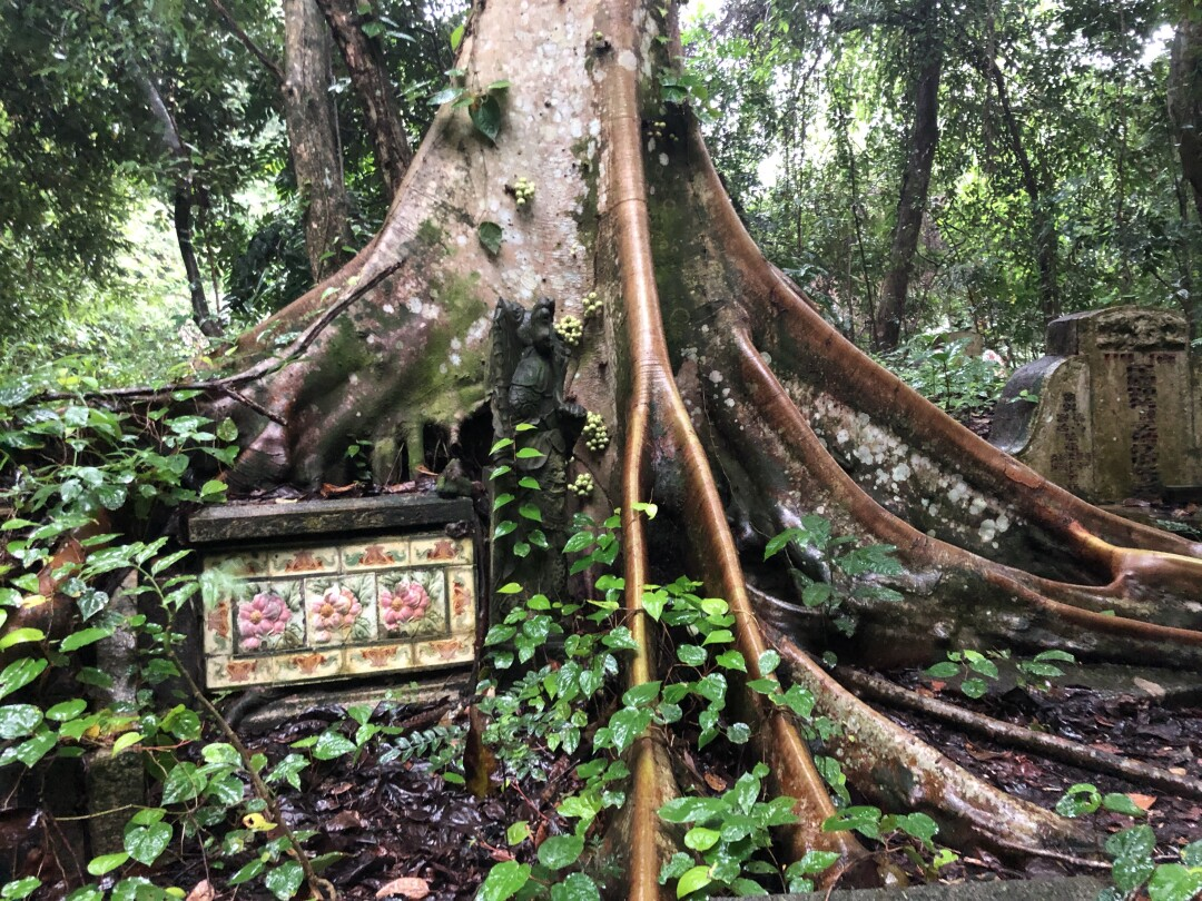 Bukit Brown Cemetery