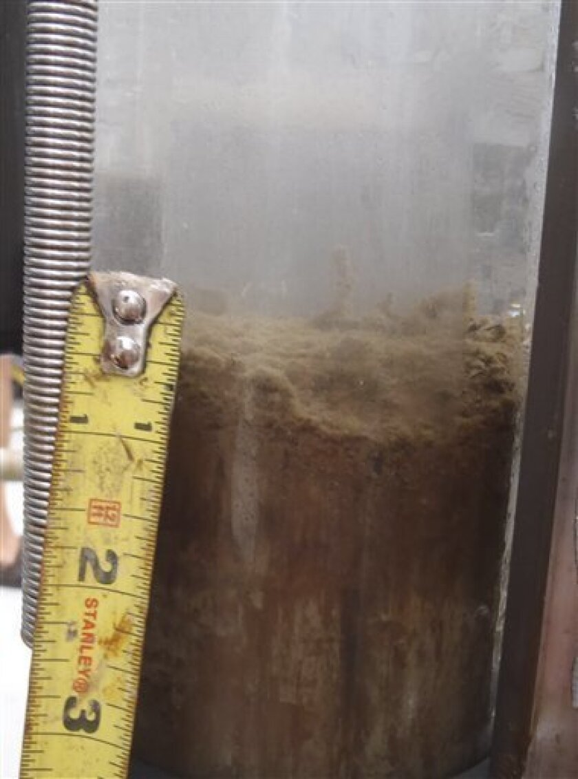 "This undated handout photo provided by Samantha Joye, UGA Department of Marine Sciences, shows a layer of oil on a sediment core. Researchers are finding oil dripping ""all over the place"" on the Gulf of Mexico sea floor, some as much as two inches thick. A University of Georgia scientific cruise is"