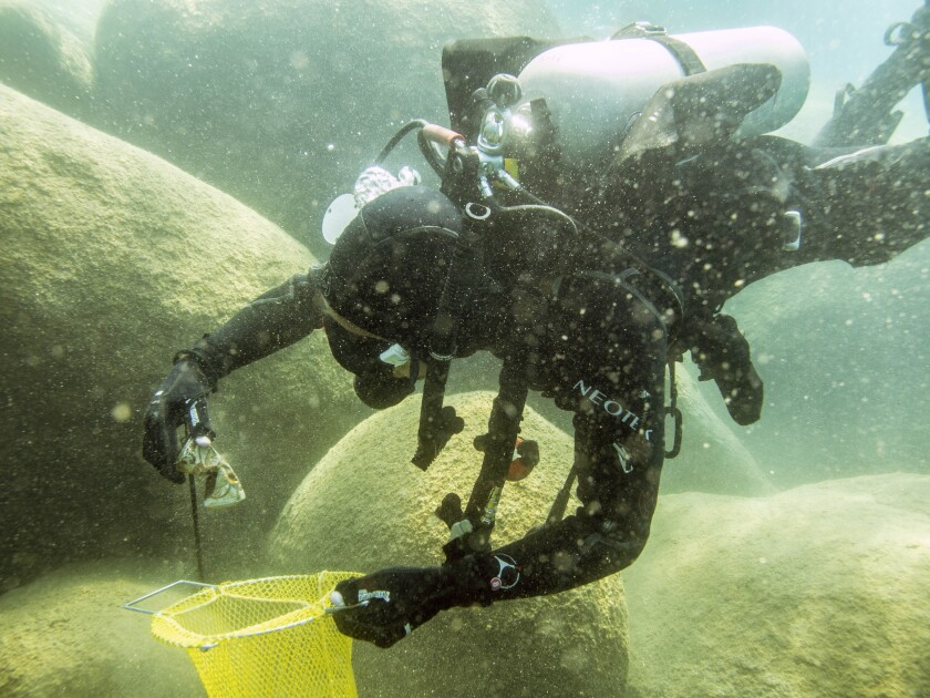This photo provided by Clean Up The Lake shows a scuba diver beneath the surface of Lake Tahoe, cleaning up trash on Friday, May 14, 2021. A team of scuba divers on Friday completed the first dive of a massive, six-month effort to rid the popular Lake Tahoe of fishing rods, tires, aluminum cans, beer bottles and other trash accumulating underwater. (Clean Up The Lake via AP)
