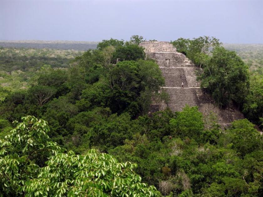 Se intuye que parte de la selva maya se verá afectada por este proyecto que pretende fomentar el turismo, pero hasta ahora se carece de un estudio de impacto ambiental, algo obligatorio para accionar este tipo de proyectos. EFE/Archivo