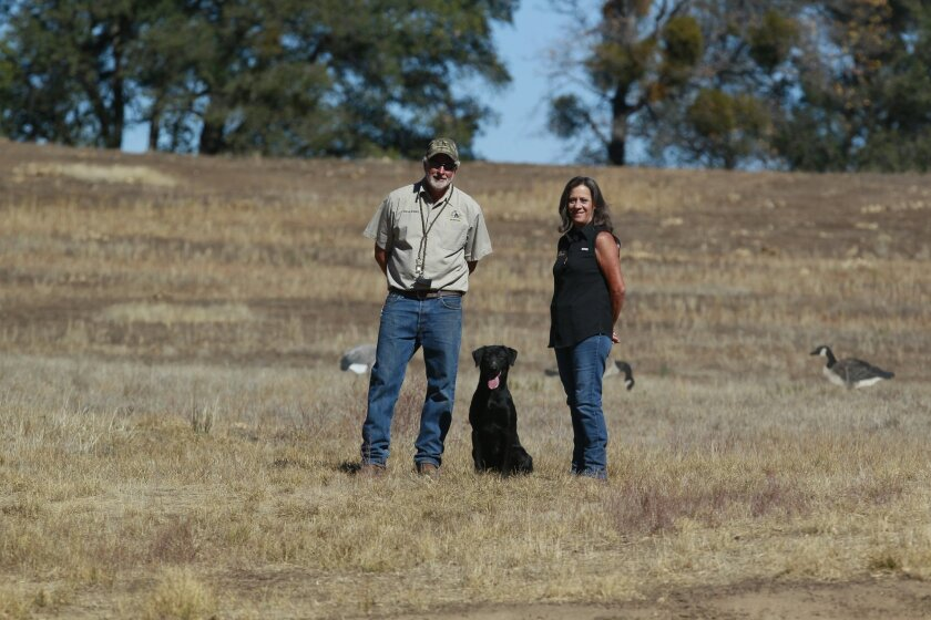 Steve and Carrie Raney got tired of the rat race and moved to the north slope of Mesa Grande where they have created the 150 acre Raney Ranch, a premier location where they breed, train and board retrievers for competition. Steve Raney was training two and-a-half year old Lana on a blind retrieve t