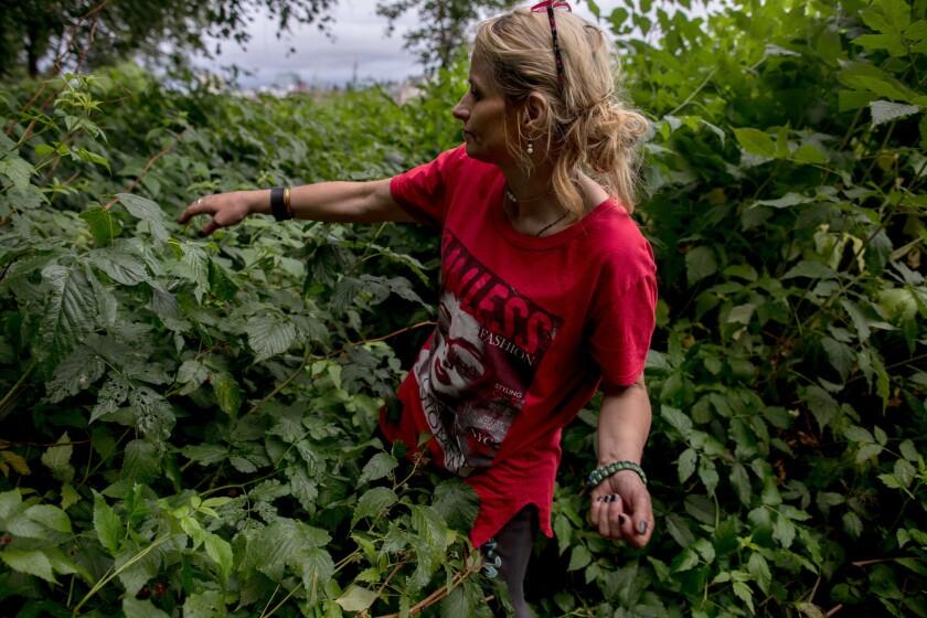 ANCHORAGE, ALASKA - Monday, August 6, 2018: Christyann Perry picks wild raspberries in the bushes ne