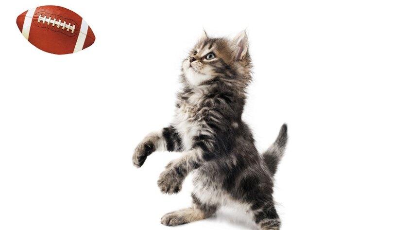 Kitten Bowl II is coming in 2015.