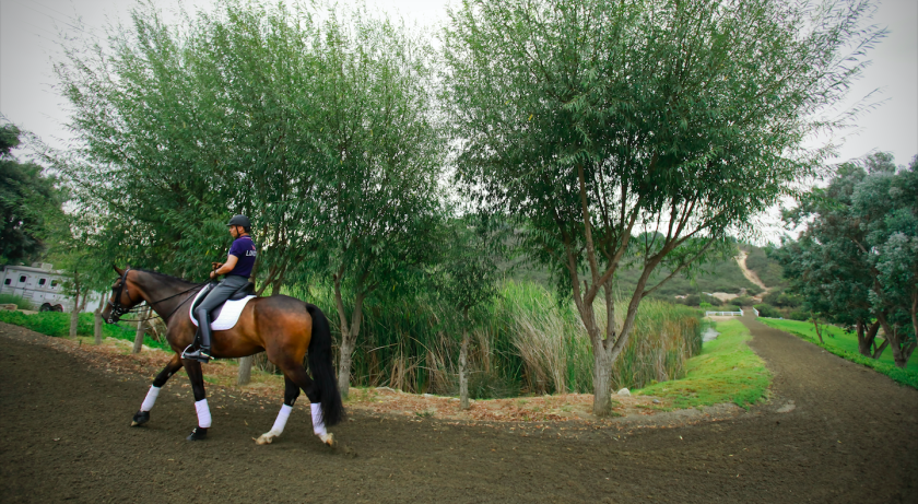 A horse walking along a trail in Carmel Valley