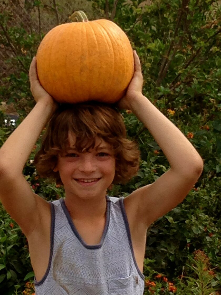 San Pasqual Elementary student Cole Hansen carries a pumpkin in the school's SAGE Garden during Harvest Day.