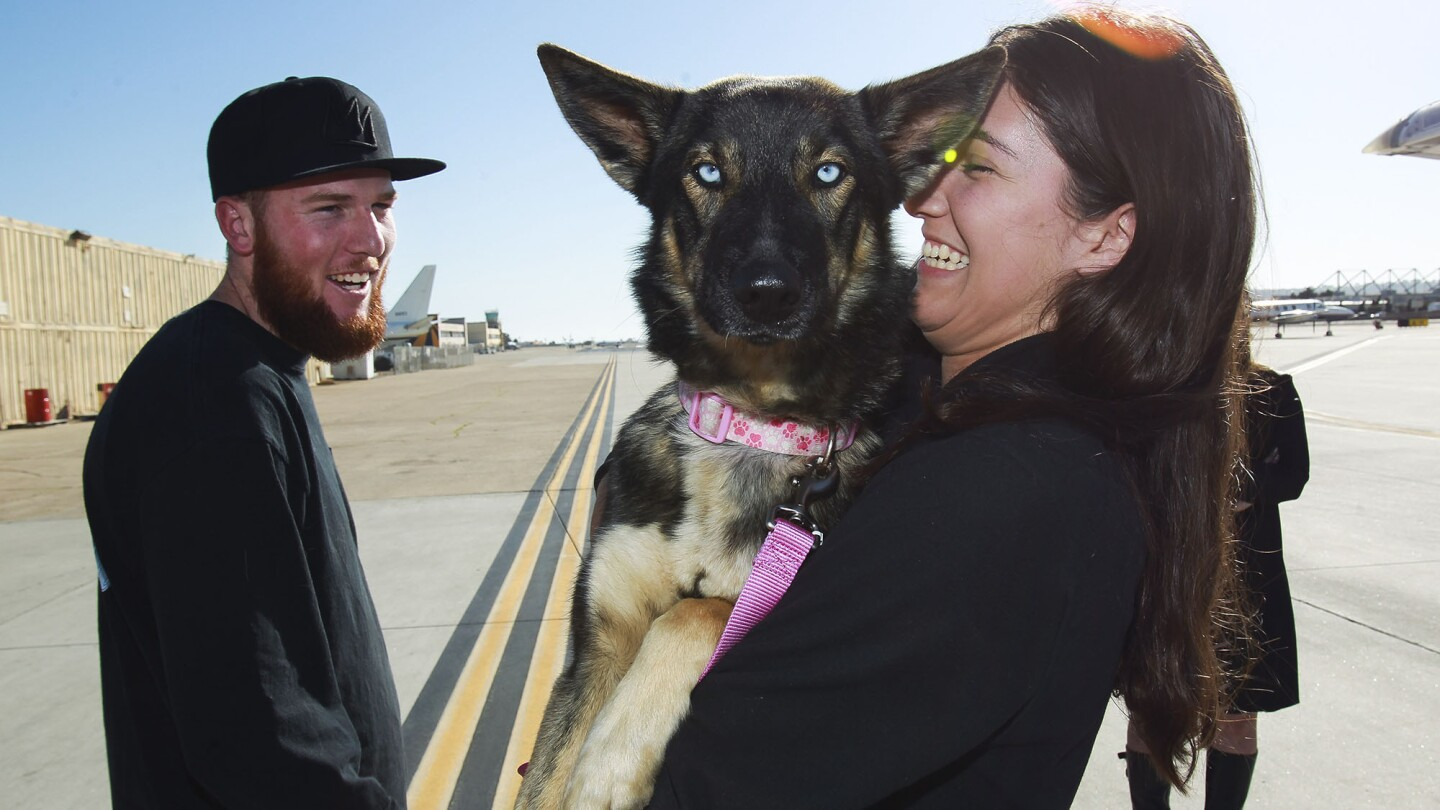 Jordyn Kastlunger hugs Luna, a 1 1/2-year-old German shepherd-husky mix who fell off a fishing boat in February and was found this week on San Clemente Island. She and Conner Lamb take possession of the pooch Wednesday at Naval Base Coronado for the dog's owner.