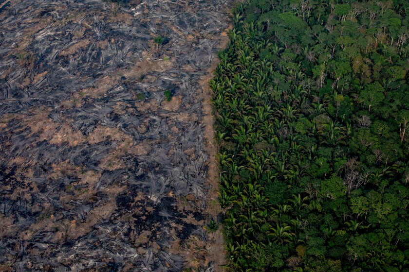 Amazon fire destruction in Brazilian rainforest