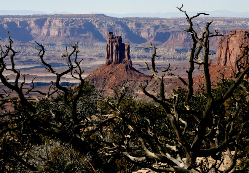 In Utah's Canyonlands National Park, look for framing devices (like gnarled trees) to impose order on your composition. It doesn't hurt to include features like Candlestick Tower, either.
