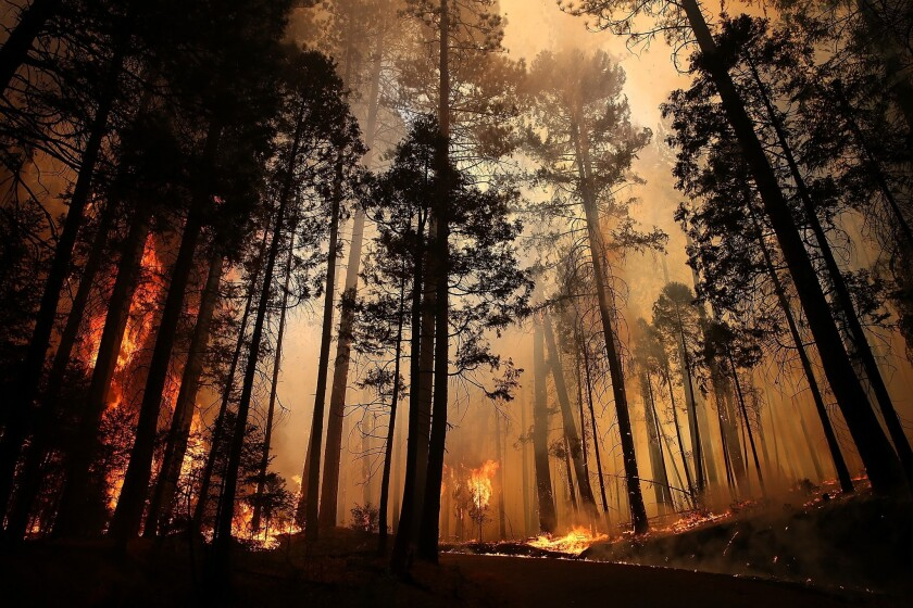 The Rim Fire consumes trees near Groveland, Calif., in 2013. The fire scorched more than 250,000 acres in and around Yosemite National Park.